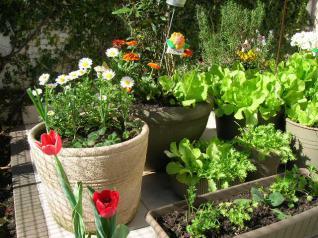 Integral inscribe a curso dise o de balcones y jardines for Curso de diseno de jardines