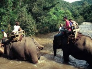 Un elefante mat� a un turista