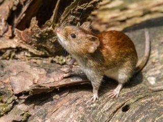 Epuyén epicentro de un nuevo brote de hantavirus