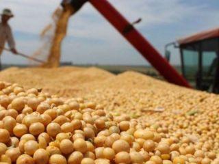 La soja se acerca en Chicago a los US$ 600 por tonelada y suben también el maíz y el trigo
