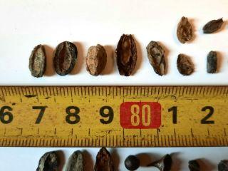 San Pedro: Encuentran fósiles de semillas, moluscos y peces de Cinco mil años de antigüedad
