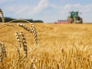 Fiscal pide suspender la autorización para comercializar semillas y trigo transgénico