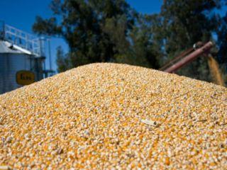 Agricultura dejará sin efecto el límite de 30.000 toneladas diarias para exportación de maíz